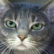 Picture this Pet - Austin Pets Alive -Bonnie 1 - March 2015