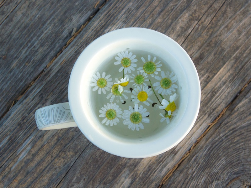 Photo of chamomile steeping in a tea cup