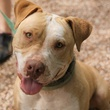 headshot Romeo the dog from APa! pet of the week