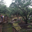 Houston Zoo, View from The Nau Family Gorilla Treehouse, May 2015