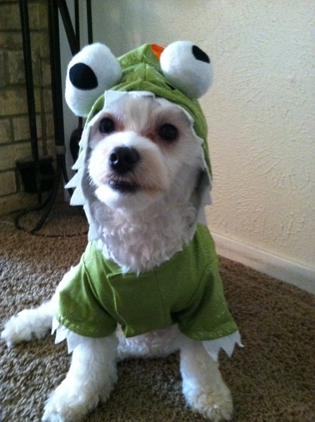Dog in dragon costume