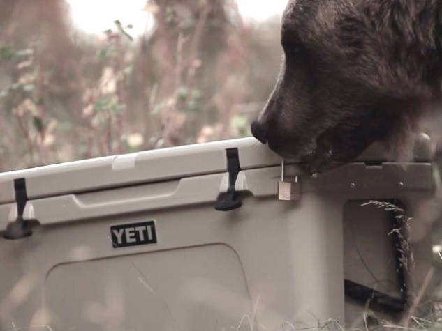 Yeti Coolers Grizzly Bear