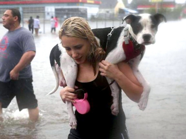 Tied Up, Abandoned: Dogs, Other Animals Left To Face Hurricane Harvey