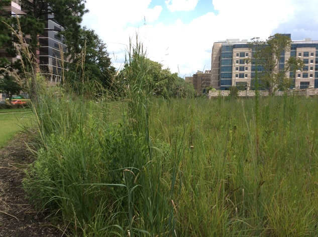 Weeds grow on site where the Prudential building was torn down three years ago by M.D. Anderson in the medical center.