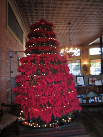 Poinsettia tree at Hugo's December 2014
