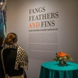 """Fangs, Feathers and Fins"" at the MFAH Art Crowd Party November 2014"