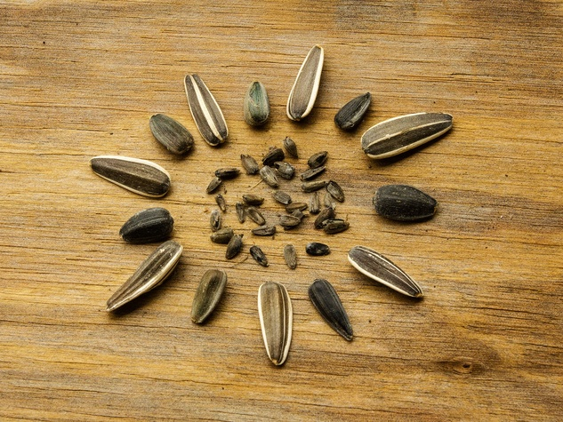 Picture of various sunflower seeds