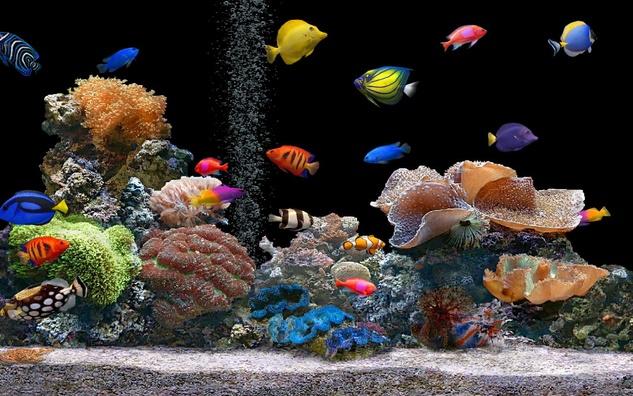 Austin Photo Set: News_melissa_aquarium breeding_may 2012_color fish