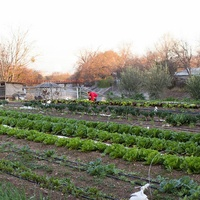 Rain Lily Farms
