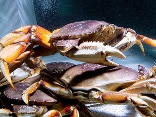 Trulucks, crab