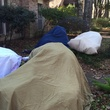 Houston weather Houston freeze January 2015 Sporting the latest in #houston chic. Sheets over the tropical plants to help them survive the freeze