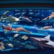 Golden Nugget Las Vegas shark tank tube with girl and sharks