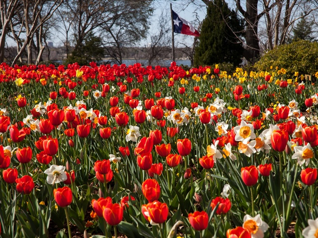 Dallas Blooms, Dallas Arboretum, Dallas, Garden