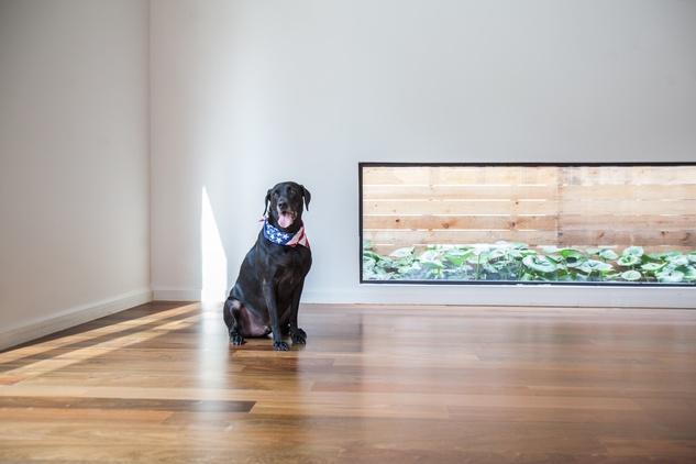 Carol Isaak Barden House of Many Gardens 3320 University July 2014 dog