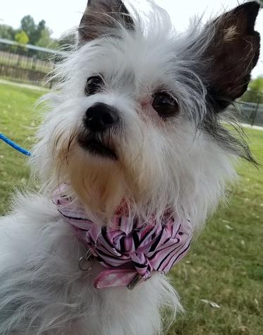 Houston, Hoffman, Pethouse Pet Sophie, September 2017