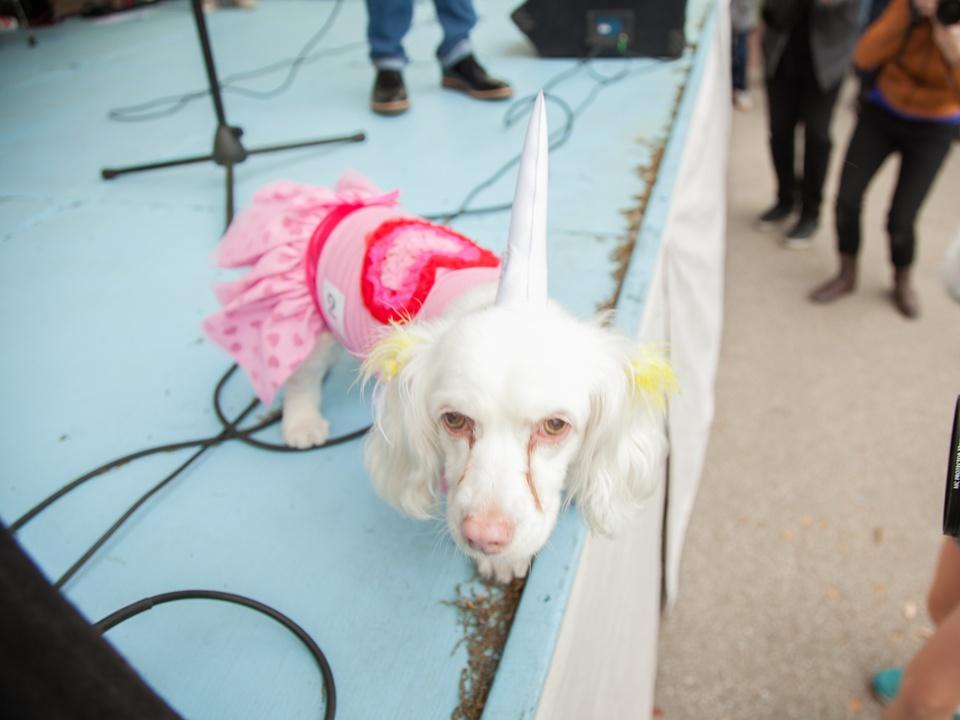 Jo's 16th Annual Pet Parade in Austin Nelly Unicorn Dog Costume