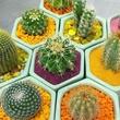 Austin Succulents