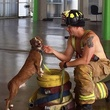 Galveston Firefighters Calendar with adoptable pets