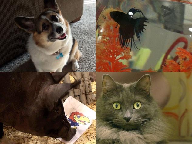 animals bracket