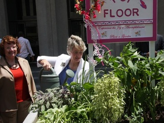 News_Joel Luks_community gardens_Downtown Houston Vegetable Container Garden Project_Kathy Hubbard_Anise Parker