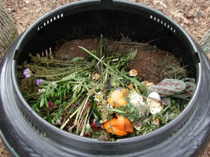 News_Living Green_plant_compost_placeholder2