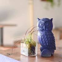 Blue Owl Brewing presents Terrarium Workshop and Beer Tasting