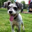 Houston, Pethouse Pet of the Week, June 2017, Arthur the dog 1