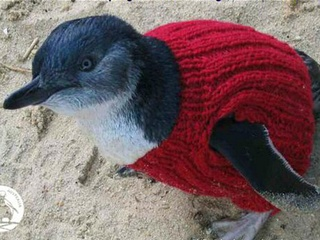 Penguin in a jumper