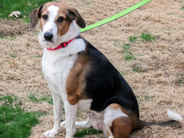 lucy SPCA pet of the week