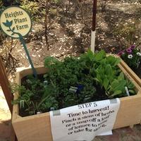 Patiovore, gardening, garden, March 2013