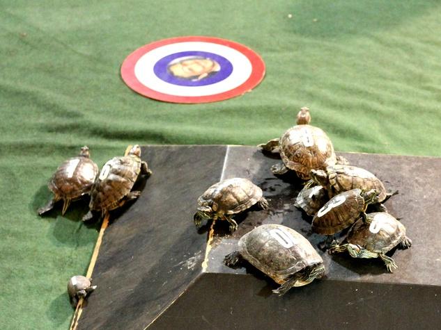 turtle racing little woodrow's