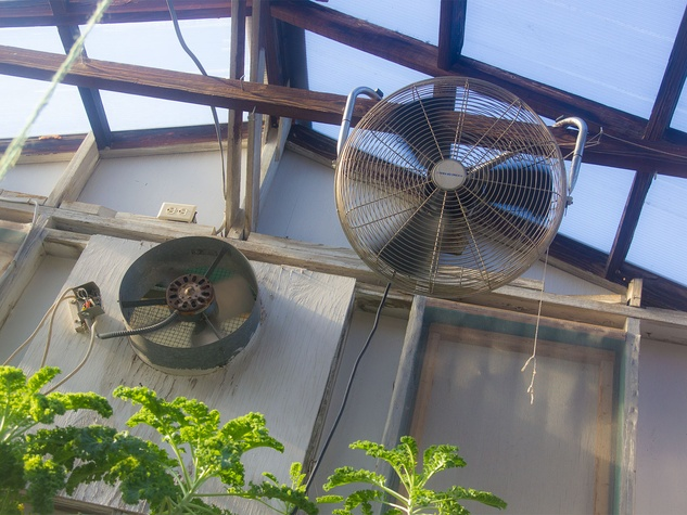 Photo of fans in greenhouse