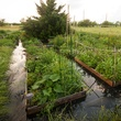 Raised garden beds in a flood.