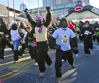 Austin Photo Set: News_Veronica_gorilla run_jan 2012_start of race