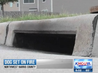 dog set on fire, dumped in sewer, burned to death July 2013 RUN FLAT