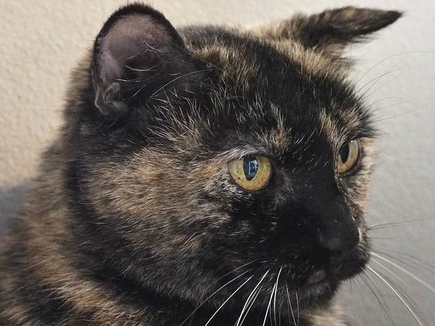 headshot of Alice the cat of APA!