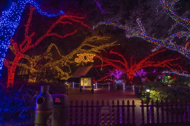 Houston Zoo lights November 2014 lights in trees