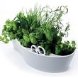 Countertop Gardening