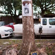 missing cat montrose coyote killer memorial shrine