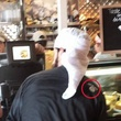 News, Shelby, Isis in Jason's Deli, Sept. 2014