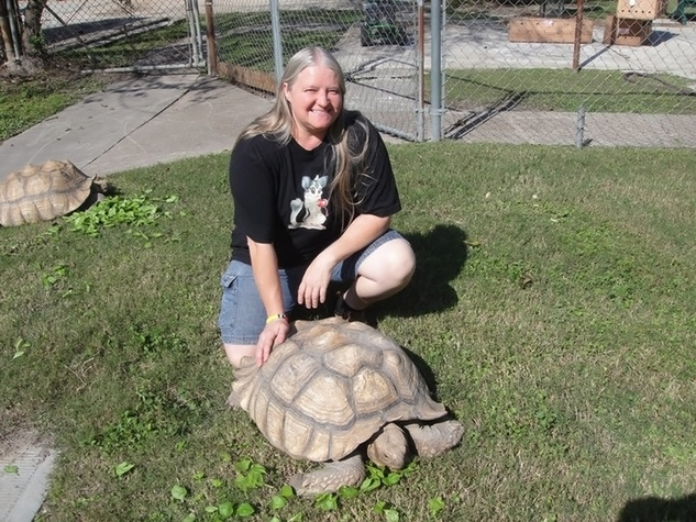 Susette Stidom of S&S Exotic Animals Inc. with turtles
