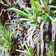 snow in Houston January 2014 plants