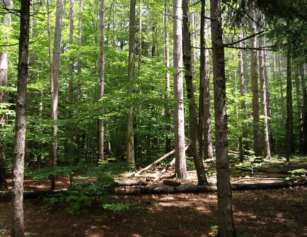 Chestnut Ridge Park trees