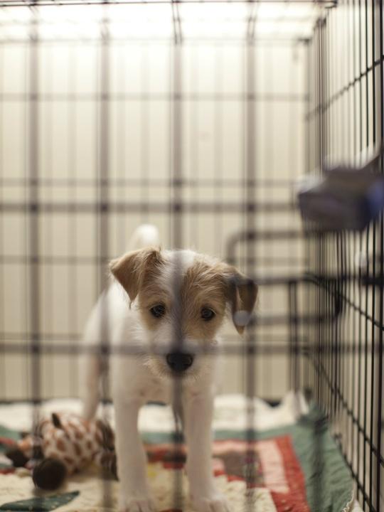 SPCA at NorthPark