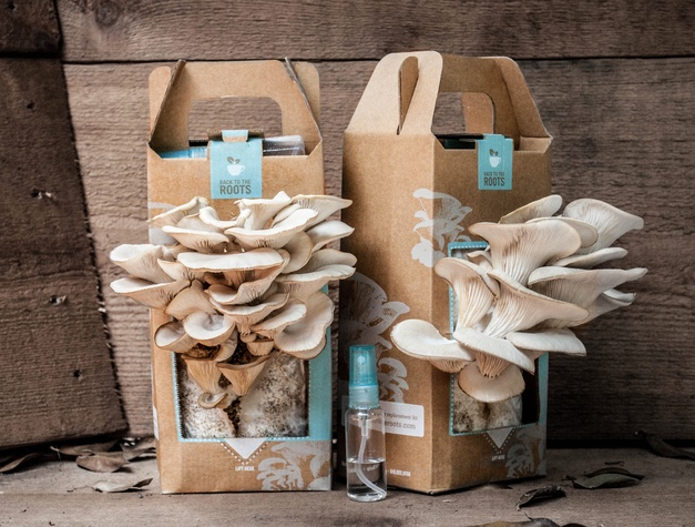 Back To The Roots Mushroom Kit