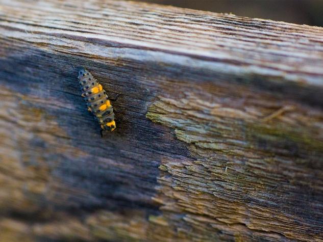 Marshall Hinsley, garden, ladybug
