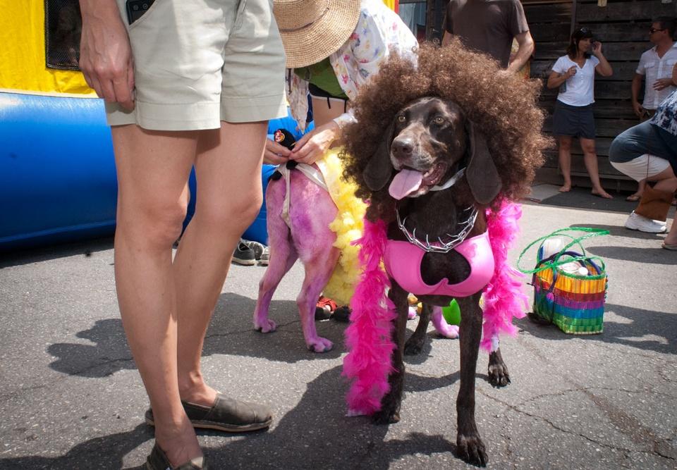 Austin Photo Set: News_Easter dog parade_april 2012_6