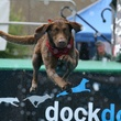 News_Dock dogs_Discovery Green_leap