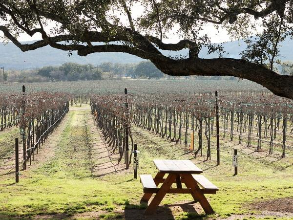 Perissos Vineyard Texas Hill Country