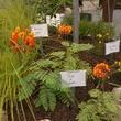 austin photo set: news_aug_beuche_garden show